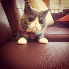 #photooftheday#cat#貓咪#貓#劉伯伯#catsofinstagram - @Liu Leon- #webstagram