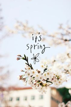 Image shared by Find images and videos about flowers, wallpaper and spring on We Heart It - the app to get lost in what you love. Spring Is Coming, Spring Is Here, Hello Spring, Spring Time, Zayn Album, Season Quotes, Spring Blossom, Pretty Art, Cute Photos