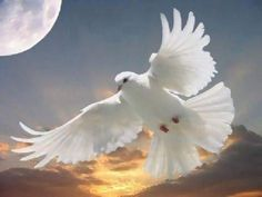 Holy Spirit Dove with moon and setting sun Dove Release, Brust Tattoo, Such Und Find, Dove Bird, Saint Esprit, Peace Dove, Learn To Fly, White Doves, Rest In Peace