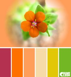 Color Palette, violet red, mustard-yellow, tan, spice orange, sand, green.
