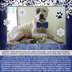 Gardena CA: SOS! Emerson needs medical care. Must be out of high-kill Carson by close of business today 11/29.