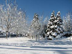 winter wonderland in Surrey BC