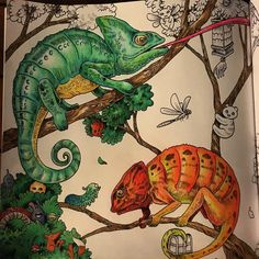 Just A Few Finishing Touches Left Find This Pin And More On Animorphia Coloring Book