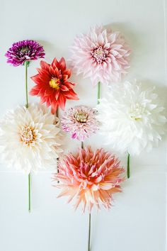 Dahlia bouquet...not even engaged but already know I will have dahlias - both my mum and grandmother's favourite flowers (they have huge gardens!)