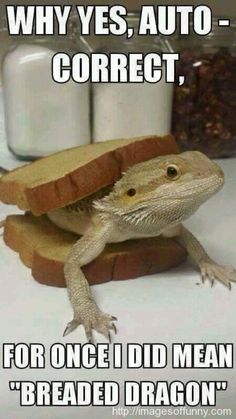 Amazing - Bearded Dragon Tank Background :-D Funny Animal Memes, Cute Funny Animals, Funny Animal Pictures, Cute Baby Animals, Animals And Pets, Funny Pets, Hilarious Memes, Bearded Dragon Funny, Bearded Dragon Cage