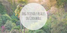 Whether you're holidaying in Cornwall, or you're a local looking for some places to take your pooch this Summer, this list is for you!