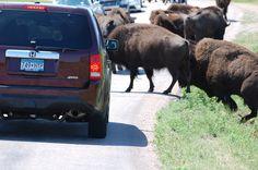 Custer National Park South Dakota.
