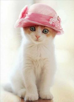 Cat in pretty pink bonnet