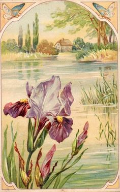 Purple Iris lake cottage