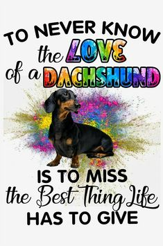 Dachshund Quotes, Dachshund Love, Thai Chi, Dachshunds, Doggies, Dog Stories, Sign Quotes, Dog Lovers, Dog Cat