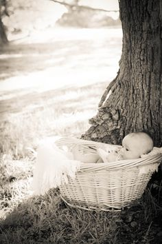 3 month old baby girl pictures basket