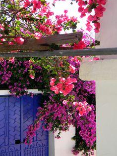 Ihmeköynnös, Skopelos, Kreikka