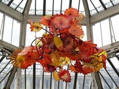 Chandelier by Dale Chihuly