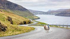 Las ovejas que le hacen la competencia a Google / @LaVanguardia | #readyfordigitalcitizenship