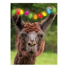 Shop Whacky Lit Up Llama Holiday Postcard created by Therupieshop. Personalize it with photos & text or purchase as is! Llama Christmas, Christmas Holidays, Alpaca Funny, Holiday Cards, Christmas Cards, Cute Llama, Holiday Postcards, White Elephant Gifts, Postcard Size