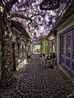 Cafe under a canopy of lilac. Molyvos, Lesbos, Greece