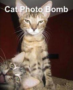 hahahahahaha... cat photo bomb :)