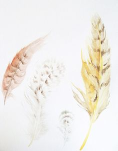 Soft feathers - nice and soothing for a little girl's room Feather Illustration, Illustration Art, Illustrations, Feather Painting, Feather Art, Watercolor Paper, Watercolor Paintings, Watercolours, Heart Art