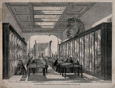 "Verity Burke on Twitter: ""The @britishmuseum's Botanical Room, 1858 🍃 #19thC #victorian #histsci https://t.co/G0A5Ci92Xj"""