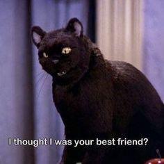 Salem Sabrina, Sabrina Cat, Cat Memes, Funny Memes, Hilarious, Meme Gifs, Salem Cat, Salem Saberhagen, Memes Arte