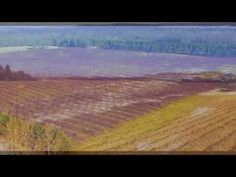 Drone footage over winter vineyard - YouTube