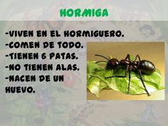 Los insectos para infantil Bilingual Education, Acting, Science, Homeschooling, Animals, Kindergarten Teachers, Insect Activities, Children Holding Hands, Insects