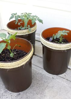 Do THIS to a bucket from Home Depot to make your garden look amazing!