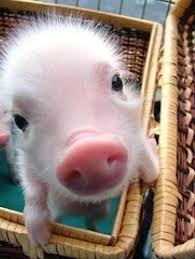 cute animals - Recherche Google