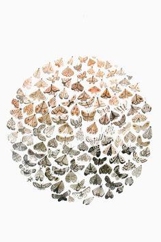 Moths by Sarah Burwash (via design*sponge http://www.designsponge.com/2012/06/sarah-burwash.html)
