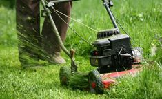 Rasen mähen Rasenschnitt