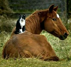 my two favorite animals of all animals.....they both can be so majestic...yet  adorable.....