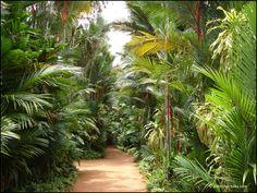 The Brief Garden of Bevis Bawa in Sri Lanka