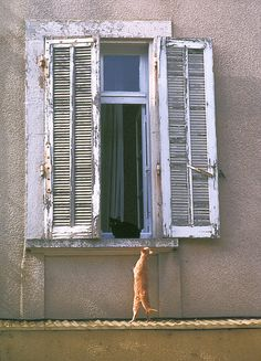 come out and play Window with black cat, Nyons, France by cocoi_m on Flickr