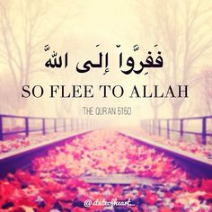 Qur'an adh-Dhariyat (The Winnowing Winds) 51:50:  So flee to Allah . Indeed, I (Muhammad pbuh) am to you from Him a clear warner.
