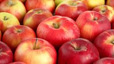 Wondering where to go apple picking near NYC? We've rounded up the best farms and orchards in the tristate area for families to go apple picking this fall. Apple Picking Farm, Apple Orchard, Day Trip To Nyc, Pick Your Own Apples, Nyc Holidays, Stuff To Do, Things To Do, Nyc With Kids, Autumn Activities For Kids