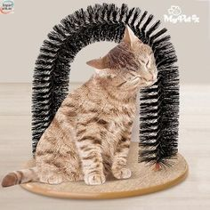 Plastic Bristles Purr-fect Arch Sel-Groomer Massage in one Cat toys brush Pet toy Cat Groomer Dog Toy Mascotas Pet Dogs, Dog Cat, Cat Scratching Post, Catnip Toys, Cat Supplies, Garden Supplies, Buy A Cat, Cat Grooming, Cool Pets