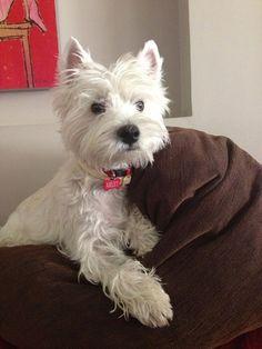 Arlet ~ via Westitude fb ~ re-pinned by doggiechecks.com dog breed personal checks and stationery