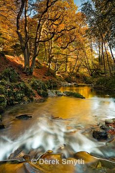 the River Shimna in Tollymore Forest Park, County Down. Northern Ireland.
