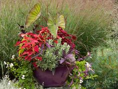 Red and purple container. Planter. Le Jardinet Designs.