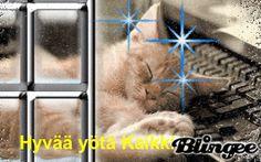Custom Photo, Good Night, Have Fun, Coding, Animals, Nighty Night, Animales, Animaux, Animal