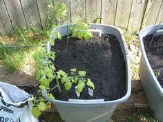 Vegetable Garden Using Bagged Potting Soil   Bing Images | Gardening |  Pinterest | Vegetable Garden And Gardens