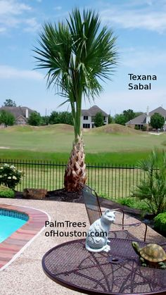 1000 Images About Palm Trees Austin Dallas San Antonio