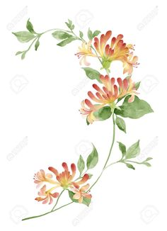 Honeysuckle watercolor tattoo idea for June birth month