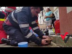 Excelente Vídeo, Bombeiro faz RESPIRAÇÃO BOCA A BOCA para salvar a vida do cão - YouTube