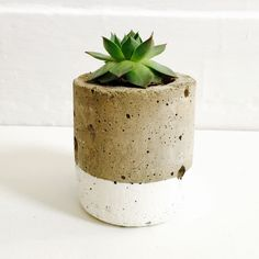 A personal favorite from my Etsy shop https://www.etsy.com/listing/268187401/lyons-succulent-cement-planter
