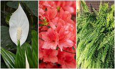Íme, a híres NASA lista: ez a 15 szobanövény tisztítja legjobban a beltéri levegőt Gerbera, Nasa, Plants, Plant, Planets