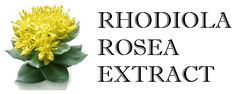 What is rhodiola rosea extract good for? - stress adaptogen - anti-depressive  - reduces fatigue