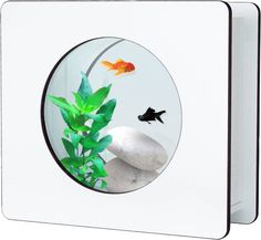 Aquarium Nano Fashion Blanc 6 L 32.5x12.2x29.5cm sur Jardindeco 62.01 €