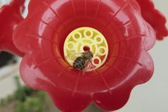How to Keep Wasps & Bees Off of a Hummingbird Feeder | eHow