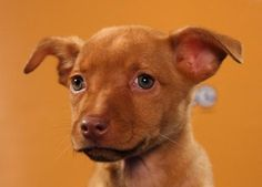 Delilah on the Puppy Bowl! Looks like a baby Acey.